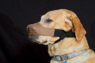 Dog Nose Protector