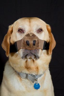 Dog Nose Protectors